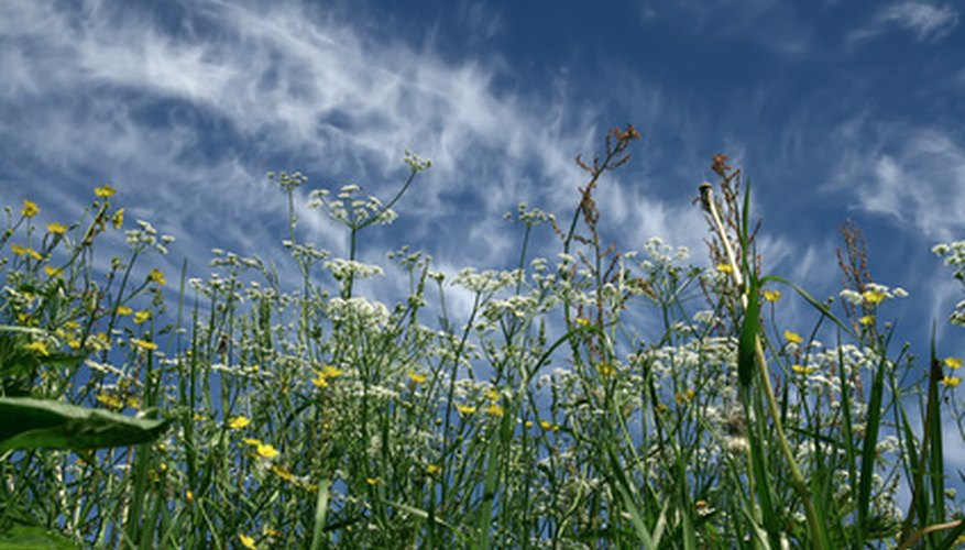 Long grass and weeds steal  the nutrients and deplete the soil.