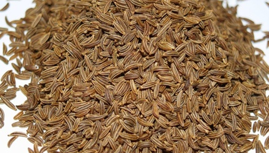 Cumin is an herb that can be grown from seed.