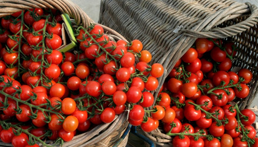 Small tomato varieties grown in hanging baskets