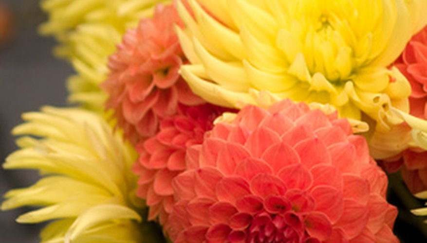 Colorful dahlias add variety to the flower bed.