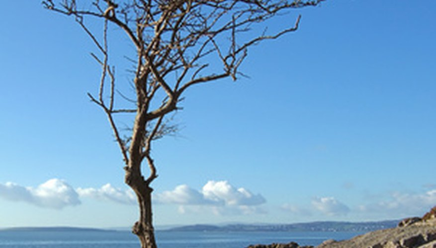 Fruit trees can thrive on the coast with proper care and selection.