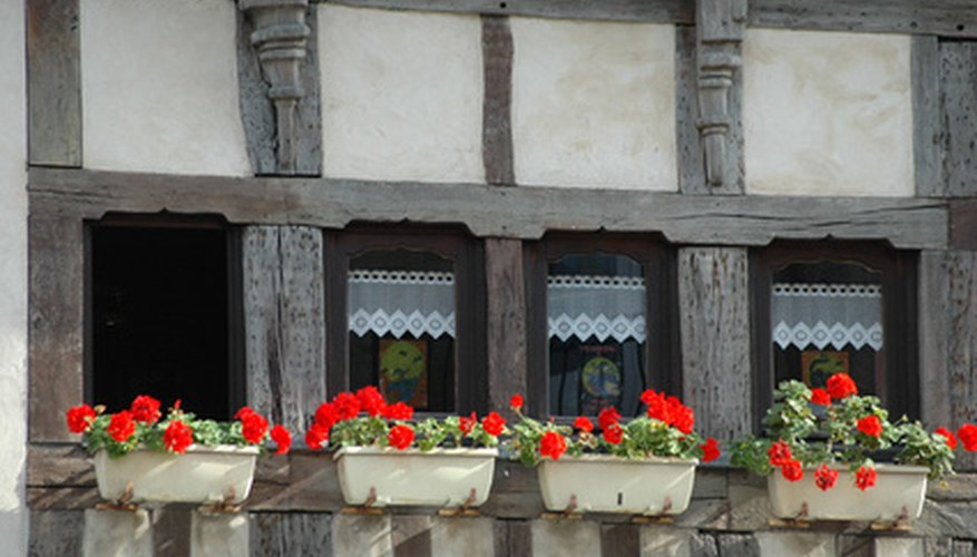 Plant geraniums in window boxes, and with proper care, you can enjoy the bright blooms all summer long.