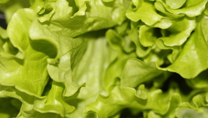 Lettuce is a leafy vegetable that grows above ground.