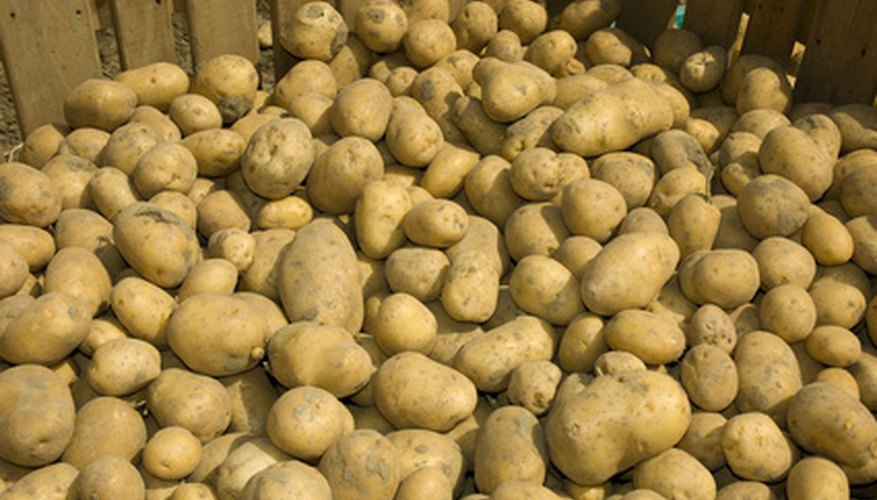 Potatoes are just one of many vegetables that can be stored in a bin.