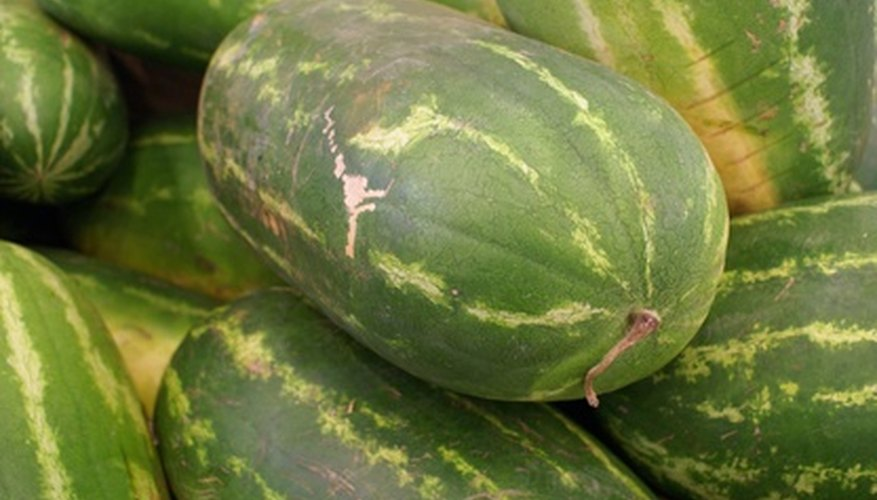 Watermelon is a warm-season plant.