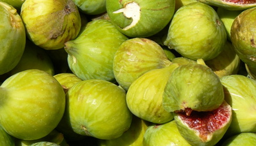 A bushel of ripe green figs with ruby flesh.