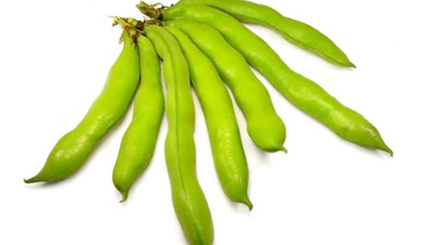 Broad beans are also known as fava beans.