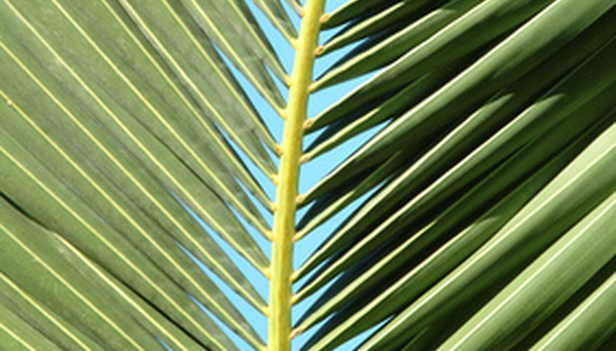 A painted palm frond can add beauty to any object in your home.