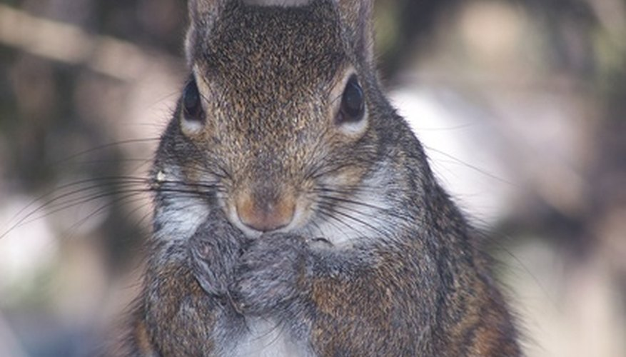Keep squirrels and other pests out from your garden with a fence.