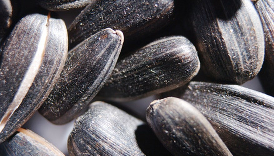 Black sunflower seeds have a distinctive stripe on their side.