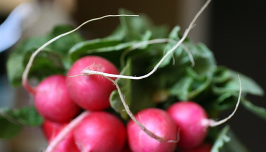 Radishes can be added to salads, steamed or added to a vegetable plate.