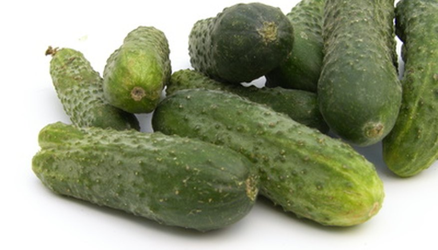 To grow a lot of cucumbers you'll need a healthy plant and a good support system.