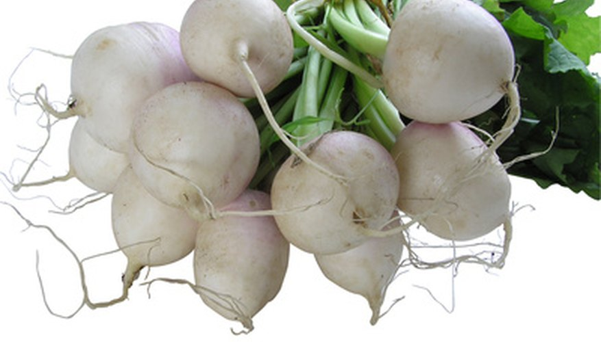 Turnips and potatoes are cold weather crops
