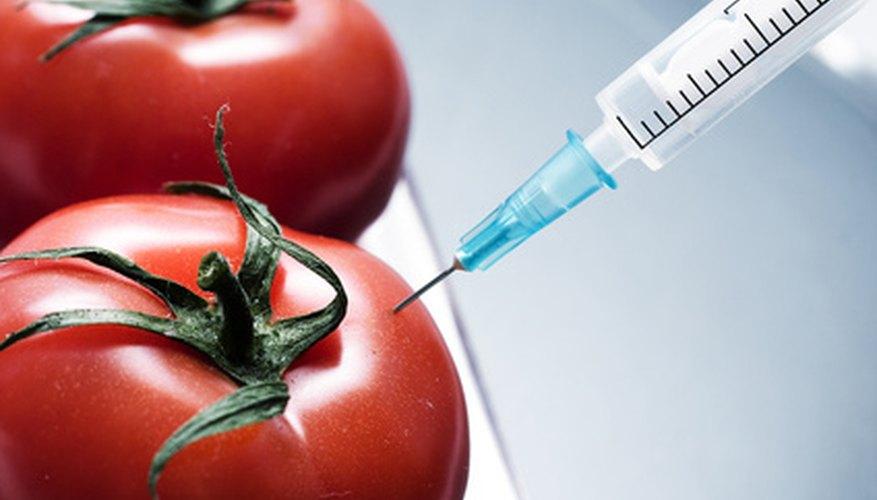 La biotecnología tiene muchas aplicaciones, incluyendo las ciencias de la alimentación.