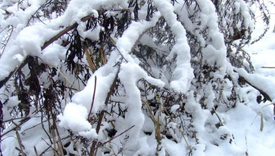Colorado se conoce por sus inviernos nevados.
