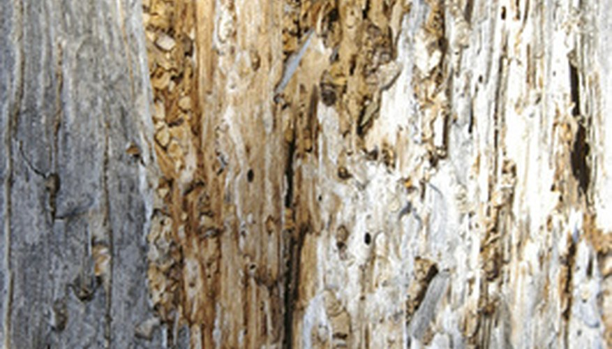 Termites are extremely destructive to wood.