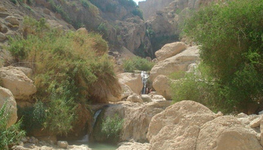 Un oasis en el desierto sirve como un cruce entre dos ecosistemas distintos.