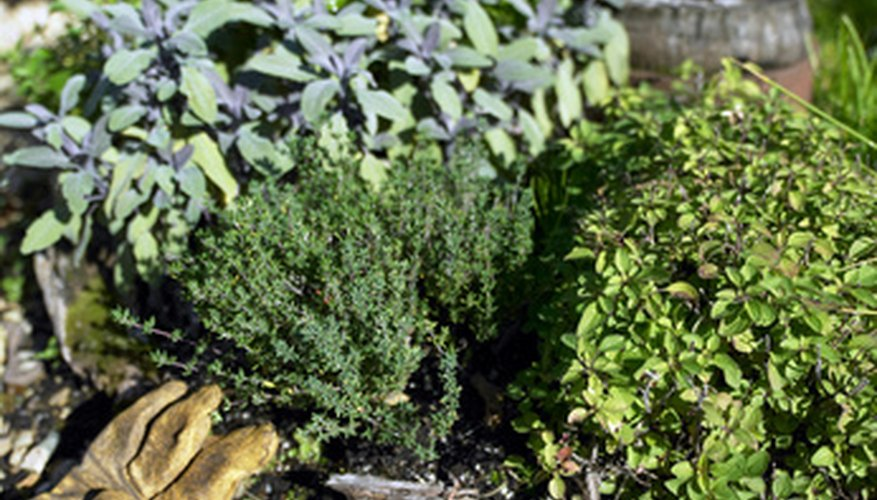 Mulching herbs controls weeds and conserves moisture.