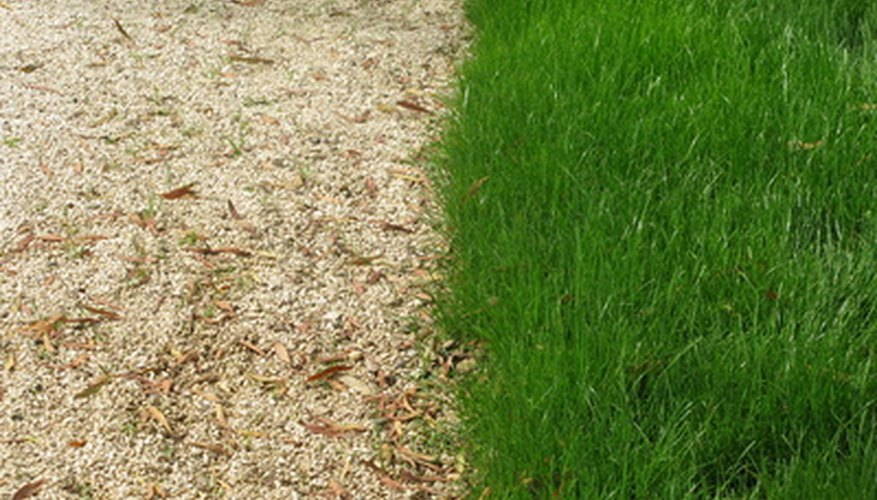 Turf grass is an important part of many home landscapes.