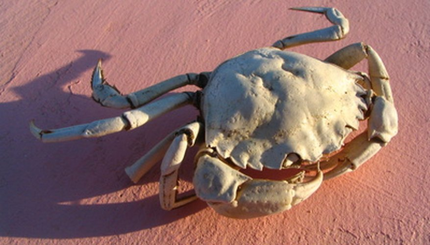 Crabs live in the intertidal zone.