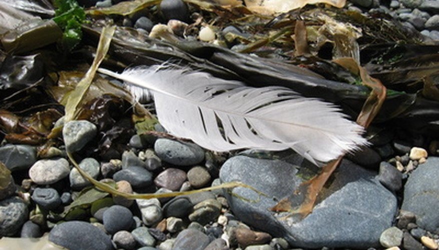 Feathers make light roofing material.