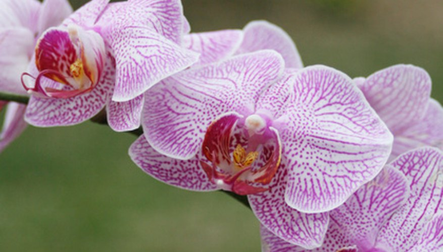 Orchids have colorful lower petals to attract insects.