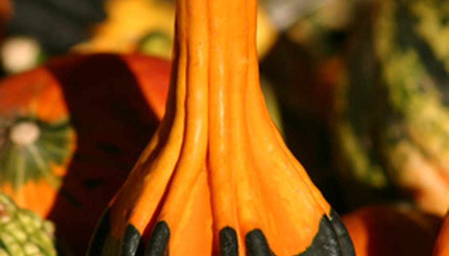Gourds with elongated necks make excellent rattles.