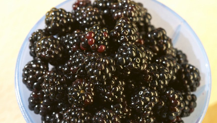 Some blackberry varieties are disease-resistant.