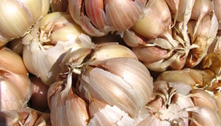 Start your own garlic plant from a head at the market.