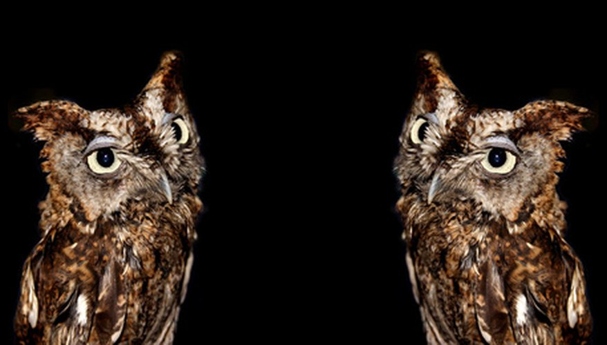 Owls have large pupils which let a lot of light in at night for excellent night vision.