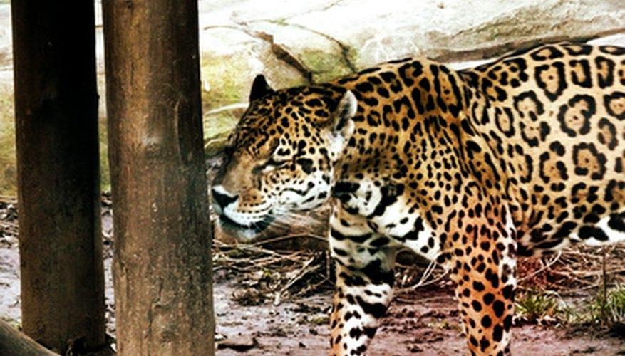 Los jaguares tienen un pelaje distintivo, así que la tela estampada adecuada expresará la idea del disfraz.