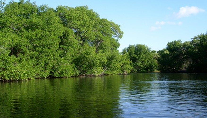Los ecosistemas requieren estabilidad para sobrevivir.