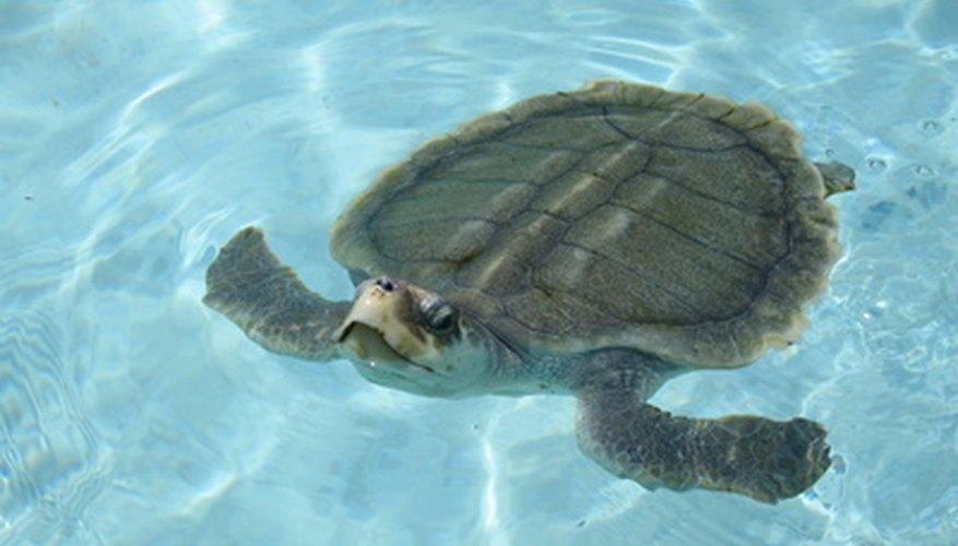 Ayuda a los niños a conocer a estos antiguos reptiles oceánicos.