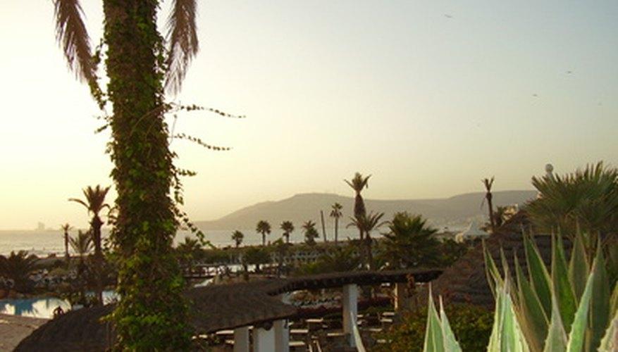 A pesar del duro clima del desierto, Marruecos cuenta con cientos de especies de plantas y animales.