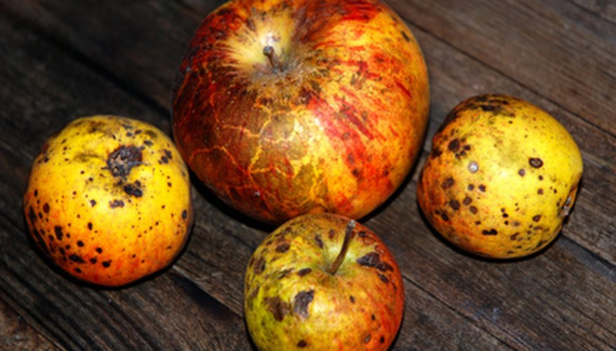 Problematic symptoms on apples are often due to nutrient deficiencies.
