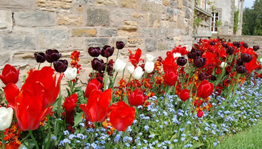 Bulbs and perennials from seeds create a pretty mixed border.