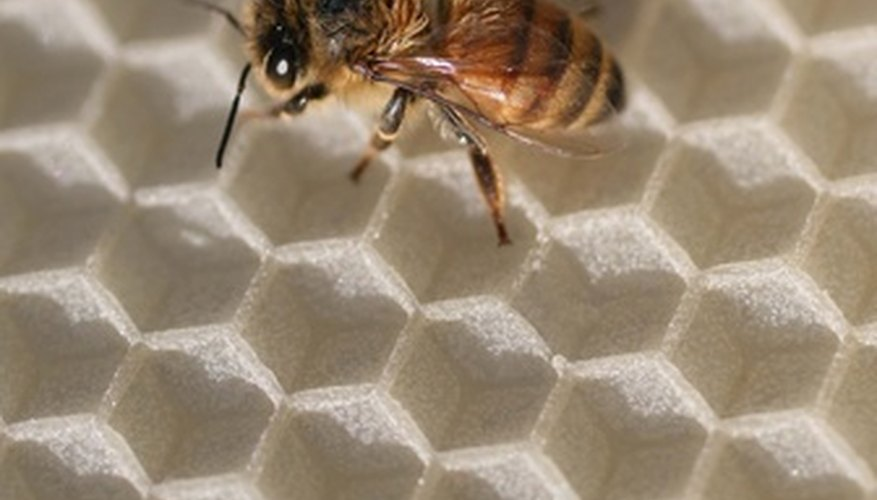 Bees are important pollinators, but unwelcome to those with bee sting allergies.