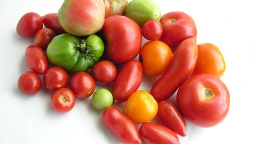At over 90 percent water, tomatoes are well-suited to growing in water.