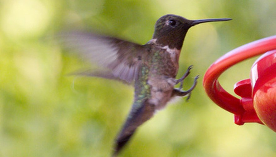 You can help to map the progress of the hummingbird's migration.