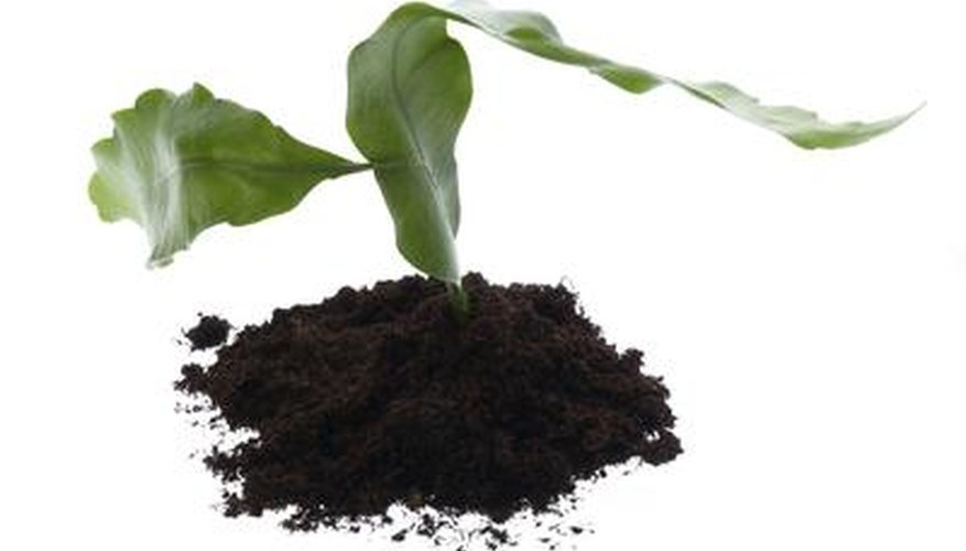 Potting soil provides nutrients for plants to grow.