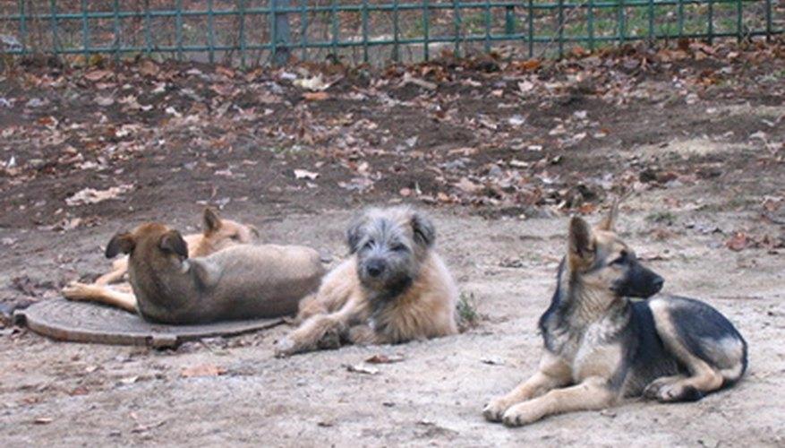 Las guarderías de perros están en alta demanda.