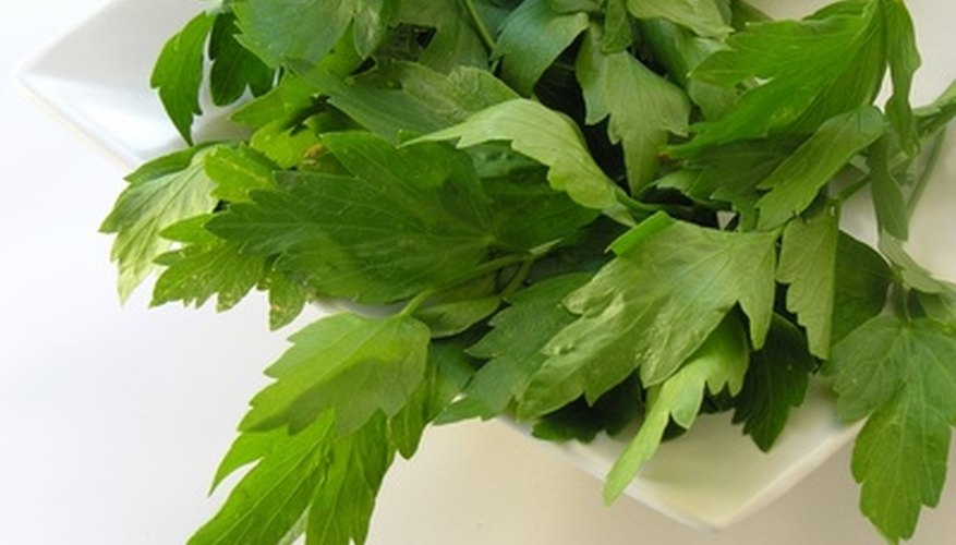 Most herbs are easy to grow and delicious to cook with.