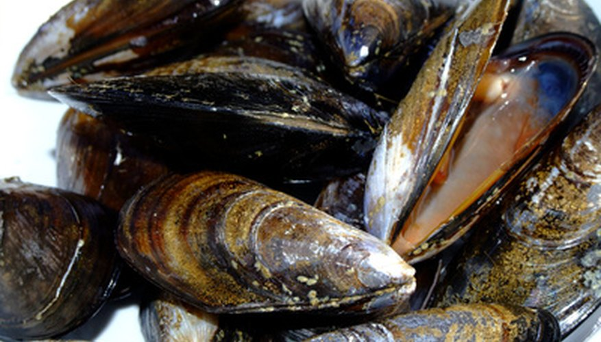 To some people, mussels are a tasty treat.