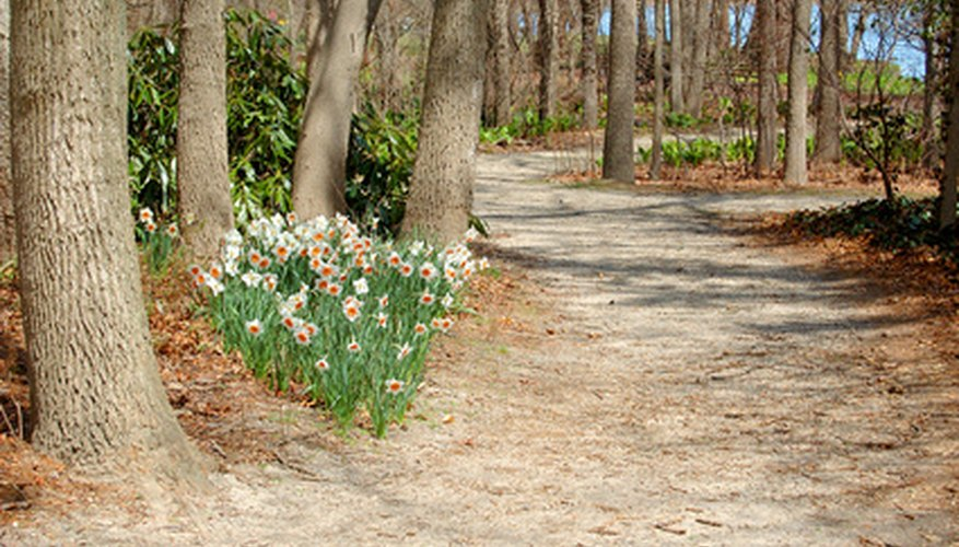 Wooded Landscaping Ideas Garden Guides
