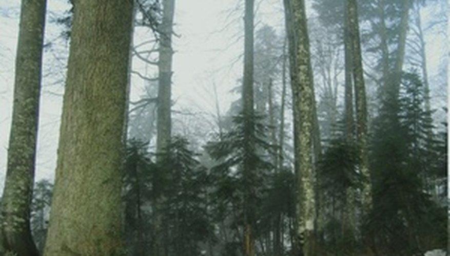Los bosques tropicales secos son diferentes de las selvas.