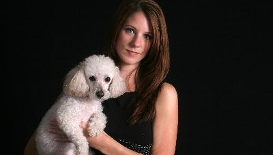 Professional grooming keeps your dog's coat in good condition, thus reducing shedding.