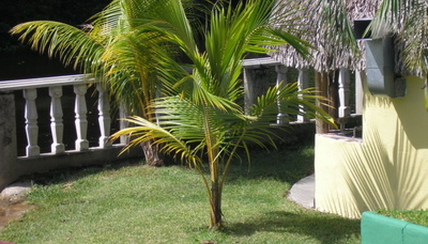 Grow a palm tree in your Florida yard.