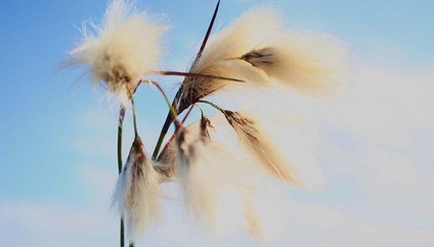 Las corrientes de aire caliente y frío llevan la fuerza del viento.