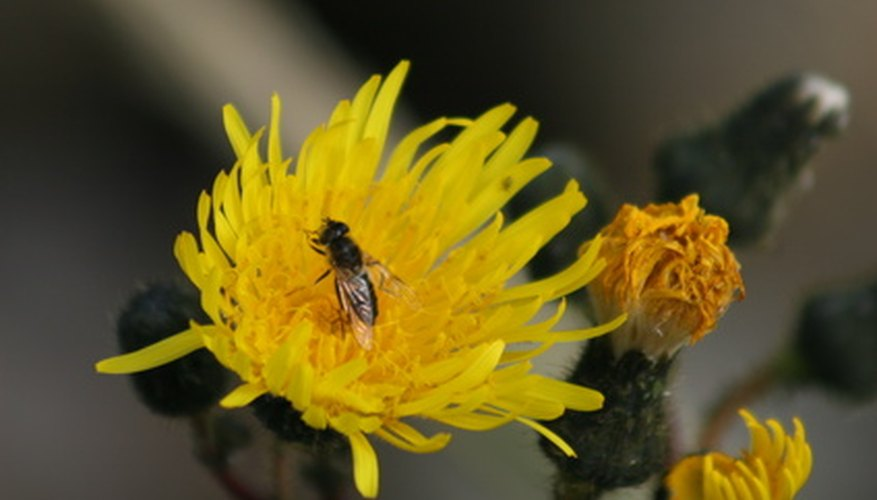 Spray insecticide to prevent insect damage on flowers.
