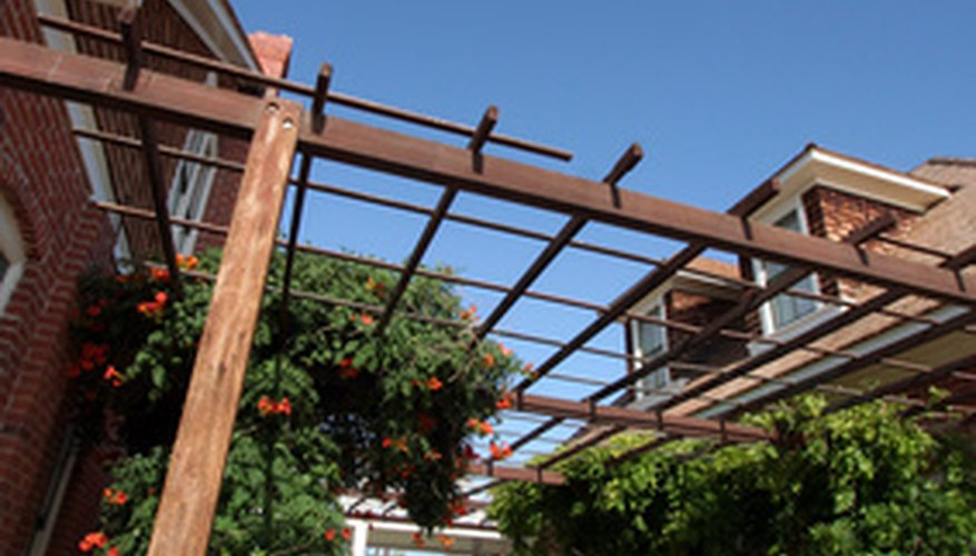 Garden trellis with trumpet vines